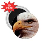 www_pics_am-birds133 2.25  Magnet (10 pack)