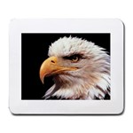 www_pics_am-birds133 Large Mousepad