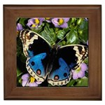 butterfly_4 Framed Tile