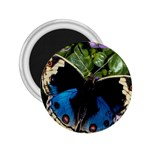 butterfly_4 2.25  Magnet