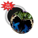 butterfly_4 2.25  Magnet (100 pack)