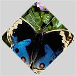 butterfly_4 Car Window Sign