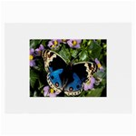 butterfly_4 Glasses Cloth (Large, Two Sides)
