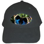 butterfly_4 Black Cap