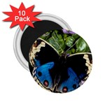butterfly_4 2.25  Magnet (10 pack)