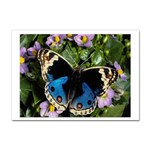 butterfly_4 Sticker (A4)