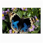 butterfly_4 Postcard 4 x 6  (Pkg of 10)