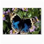 butterfly_4 Postcard 5  x 7