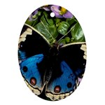 butterfly_4 Oval Ornament (Two Sides)