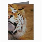 wallpaper_15015 Greeting Cards (Pkg of 8)