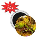 2-95-Animals-Wildlife-1024-028 1.75  Magnet (10 pack)