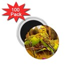 2-95-Animals-Wildlife-1024-028 1.75  Magnet (100 pack)