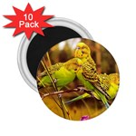 2-95-Animals-Wildlife-1024-028 2.25  Magnet (10 pack)