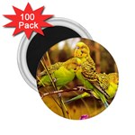 2-95-Animals-Wildlife-1024-028 2.25  Magnet (100 pack)