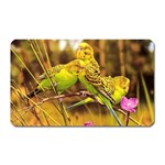 2-95-Animals-Wildlife-1024-028 Magnet (Rectangular)