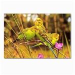 2-95-Animals-Wildlife-1024-028 Postcard 4 x 6  (Pkg of 10)