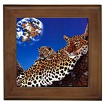2-74-Animals-Wildlife-1024-007 Framed Tile
