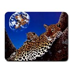 2-74-Animals-Wildlife-1024-007 Small Mousepad