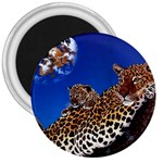 2-74-Animals-Wildlife-1024-007 3  Magnet