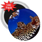 2-74-Animals-Wildlife-1024-007 3  Magnet (100 pack)