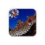 2-74-Animals-Wildlife-1024-007 Rubber Square Coaster (4 pack)