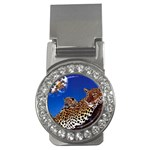 2-74-Animals-Wildlife-1024-007 Money Clip (CZ)