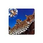 2-74-Animals-Wildlife-1024-007 Magnet (Square)