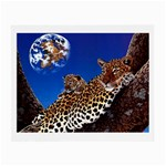 2-74-Animals-Wildlife-1024-007 Glasses Cloth (Small)