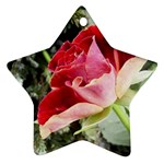 1-4 Ornament (Star)