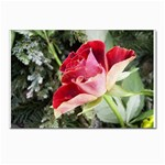 1-4 Postcards 5  x 7  (Pkg of 10)