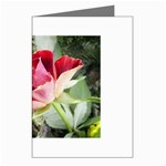 1-4 Greeting Cards (Pkg of 8)