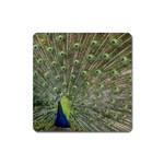 bird_15 Magnet (Square)