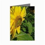 flowers_30 Mini Greeting Cards (Pkg of 8)