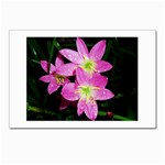 landat_01 Postcards 5  x 7  (Pkg of 10)