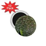 bird_15 1.75  Magnet (10 pack)