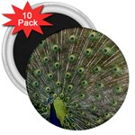 bird_15 3  Magnet (10 pack)