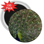 bird_15 3  Magnet (100 pack)