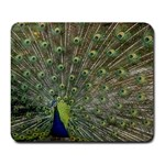 bird_15 Large Mousepad