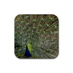 bird_15 Rubber Square Coaster (4 pack)