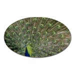 bird_15 Magnet (Oval)