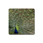 bird_15 Magnet (Square)