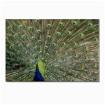 bird_15 Postcard 4 x 6  (Pkg of 10)