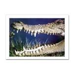 Croc Sticker (A4)