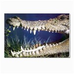 Croc Postcards 5  x 7  (Pkg of 10)
