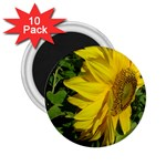 flowers_30 2.25  Magnet (10 pack)