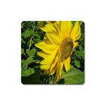flowers_30 Magnet (Square)