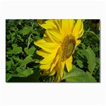 flowers_30 Postcards 5  x 7  (Pkg of 10)