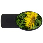 flowers_30 USB Flash Drive Oval (4 GB)