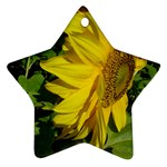 flowers_30 Star Ornament (Two Sides)
