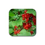 other_photos_3 Rubber Square Coaster (4 pack)